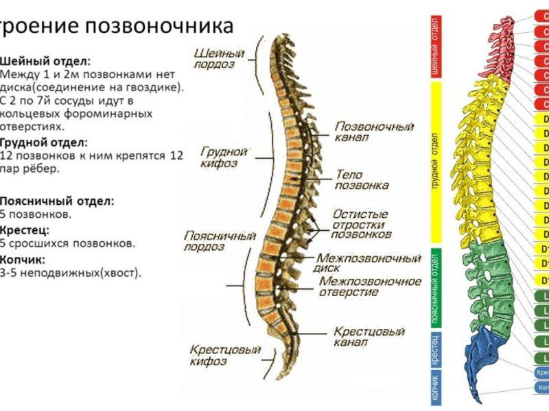 Укрепление мышц спины в домашних условиях