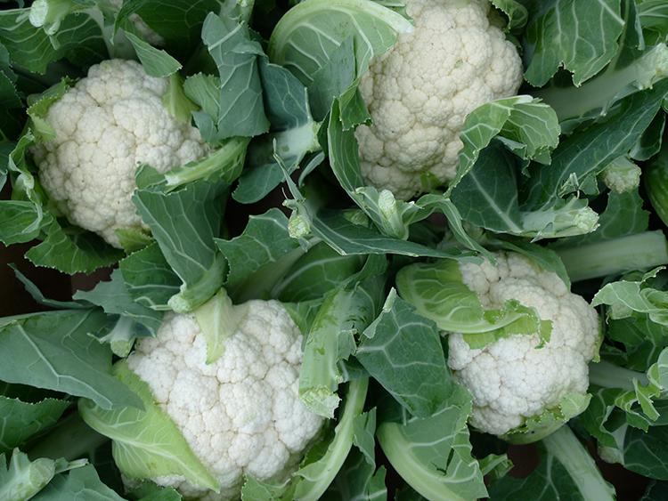 Полезные свойства и вред цветной капусты